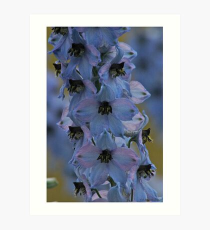 Delphinium . Norway . by Brown Sugar. Views - 297. Art Print