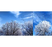 Four and Twenty (diptych) Photographic Print