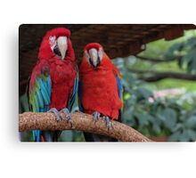 Parrot Photo Canvas Print