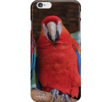 Parrot Photo iPhone Case/Skin