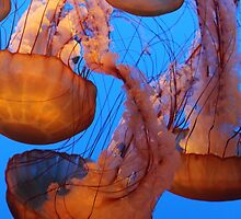 Jellyfish at Monterey Aquarium by KeljoBauer