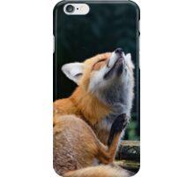 Red Fox 2 iPhone Case/Skin