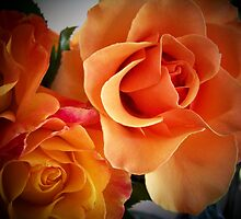 Peach Roses ( 2 of 2 )... by Rita  H. Ireland