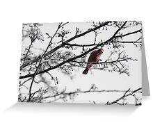 red bird blue berries Greeting Card
