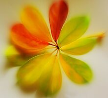 Glazed Leaves  by mikequigley