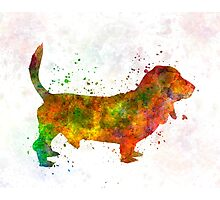 Basset Hound 01 in watercolor Photographic Print