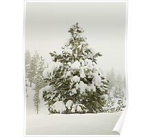 Nature's Winter Coat Poster