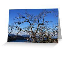 Treetop View Greeting Card