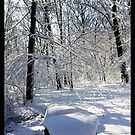 """Waveny Woods 2 by Christine """"Xine"""" Segalas"""