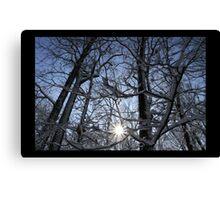 Waveny Woods 3 Canvas Print