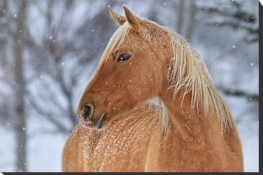 Winter Horse by Kathy Cline