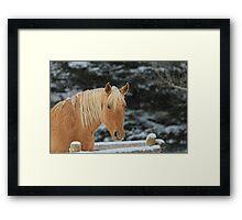 Snowy Equine Framed Print