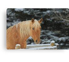 Snowy Equine Canvas Print
