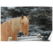 Snowy Equine Poster