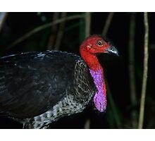 Australian Brush Turkey Photographic Print