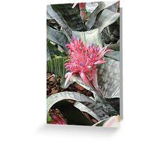 Bromelaid Flower Greeting Card