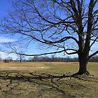 """Waveny Tree by Christine """"Xine"""" Segalas"""