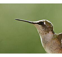 Ruby-throated Hummingbird Photographic Print