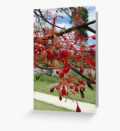 Flame Tree Flowers Close Up Greeting Card