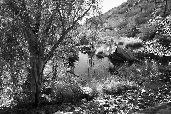 By the Water in Sabino Canyon ~ Black & White by Lucinda Walter