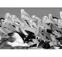 Island pelicans Photographic Print