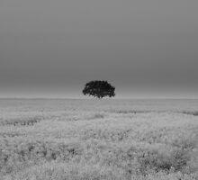 Alone by Stan Owen