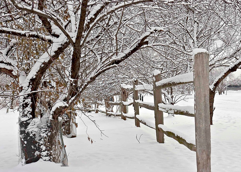 Winter Scene by Liviu Leahu
