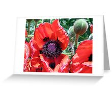 Heart Of A Poppy Greeting Card