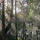 Rays of Sunshine Through the Mist by aussiebushstick