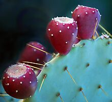 Fruitful Desert by Victoria Jostes