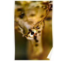 Seahorse Portrait Poster