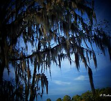 Spanish Moss - Caddo Lake State Park - Texas by Betty Northcutt