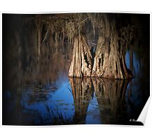 Two Together - Cypress Trees on Caddo Lake Poster