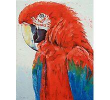 Crimson Macaw Photographic Print