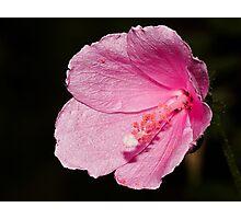 Natures wonder. Photographic Print