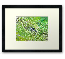 Seven Colors Framed Print