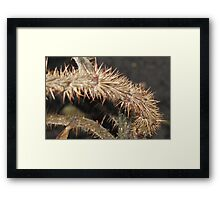 Touch If You Dare Framed Print