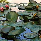 Water Lilies, Giverny, France 2008 by Frank Bibbins