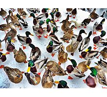 Surrounded  Photographic Print