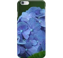 Summer flower - blue hydrangea iPhone Case/Skin