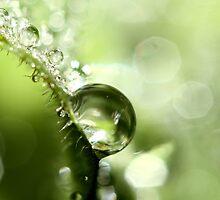 Leaf Sparkles by Sharon Johnstone