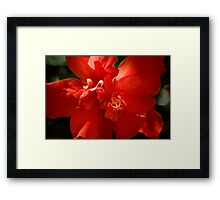 For The Love of Red Framed Print