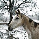 Snow Pony by Catherine  Howell