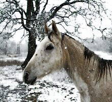 Snow Pony by Catherine  Howell