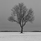 Snow Tree by Graydon Jones