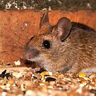Wood Mouse by Geoff Carpenter