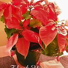 Poinsettia Thank You by © Betty E Duncan ~ Blue Mountain Blessings Photography