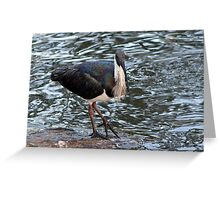 Ibis At the Pond Greeting Card