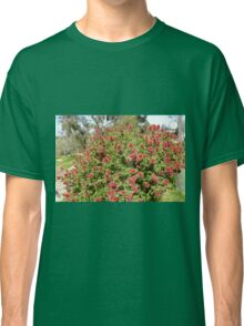 Kunzia Baxteri Australian Native bottle brush. Spring! Classic T-Shirt