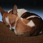Sleeping Beauty by Renee Blake